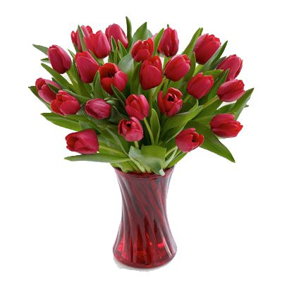 Valentine's Tulips|Blossom Florists for Chelmsford Witham and Braintree